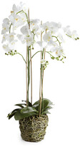 Napa Home And Garden 44'' Phalaenopsis Drop In