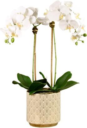 Bloomr Orchid Planter Decoration