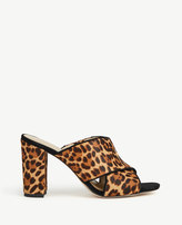 Ann Taylor Jeanette Leopard Print Haircalf Heeled Sandals