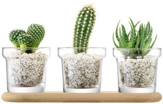 LSA International Plant Trio Pot Set & Oak Base