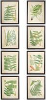 OKA Framed Fern Prints, Set of 8