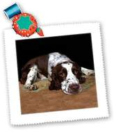 3dRose LLC qs_807_1 Dogs English Springer Spaniel - English Springer Spaniel - Quilt Squares