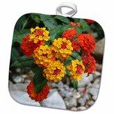 3dRose Taiche Photography - Flowers Lantana Red and Orange - 8x8 Potholder (phl_21428_1)