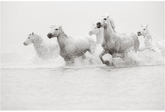 "Drew Doggett Photography Drew Doggett - Sublime 24""L X 33""W"