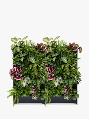 The Little Botanical 40 Indoor House Plants Living Wall