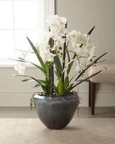 John-Richard Collection Orchid Garden