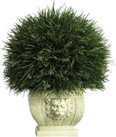 Asstd National Brand Potted Grass With White Vase Indoor/Outdoor