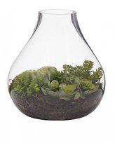 Succulent Mix In Squat Terrarium