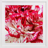 Minted Carnations Art Print