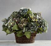 Pottery Barn Live Small Basket Hydrangea Arrangement