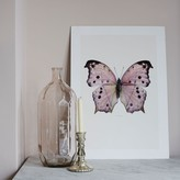 Graham and Green Butterfly Print - Pink Salamis Parhassus