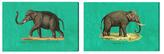 Oliver Gal Elephant (Set of 2) (Canvas)