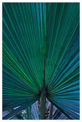 Jonathan Bass Studio Hawaii Palm, Decorative Framed Hand Embellished Ca
