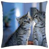 "iRocket - Adorable kittens - Throw Pillow Cover (24"" x 24"", 60cm x 60cm)"