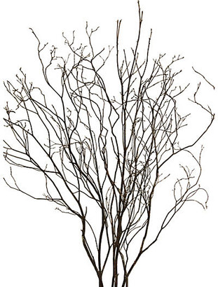 Knud Nielsen Company Set of 6 Mountain-Laurel Branches - Dried