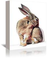 "Americanflat Rabbit Animal, 5""H x 7""W x 1""D"