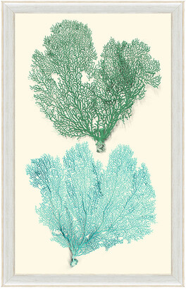 Vintage Print Gallery Blue And Green Sea Fan Corals Ii Framed Print