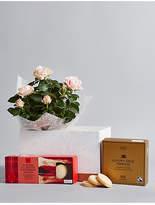 Marks and Spencer Shortbread Biscuits, Luxury Tea & Rose Plant Hamper