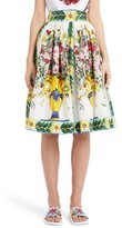 Dolce & Gabbana Women's Pleated Cotton Poplin Skirt