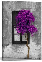 iCanvas 'Tree In Front Of Window' Giclee Print Canvas Art