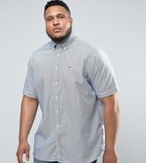Tommy Hilfiger PLUS Short Sleeve Shirt Stripe Buttondown in White/Navy