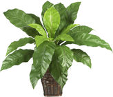 Asstd National Brand Nearly Natural Birds Nest Fern with Wicker Basket