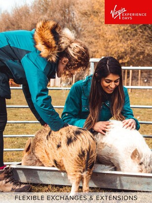 Virgin Experience Days Piggy Pet and Play for Two at Kew Little Pigs in Amersham, Buckinghamshire
