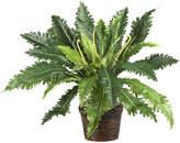 Asstd National Brand Nearly Natural Marginatum Silk Plant with Wicker Basket