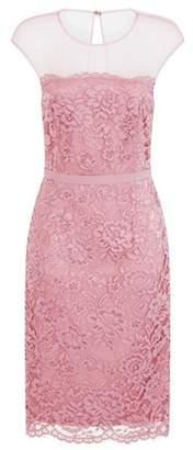 Dorothy Perkins Womens **Little Mistress Blush Lace Bodycon Dress, Blush