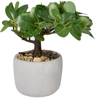 ASA Selection - Deko Bonsai Ficus Plant