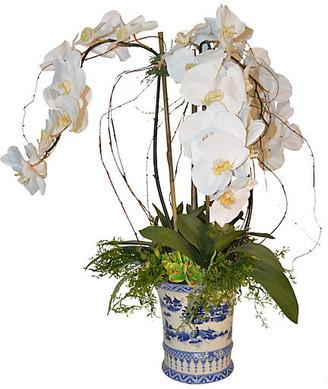 "30"" Orchid Arrangement - Faux - The French Bee - arrangement, white/green; vessel, blue/white"