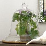 Glass Cloche - Bell
