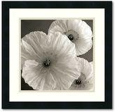 "STUDY ""Poppy Iv"" Framed Art Print By Sondra Wampler"