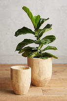 Anthropologie Aux Bois Planter Set