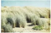 Pottery Barn Grass Dunes Framed Print by Lupen Grainne
