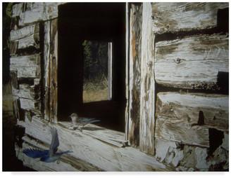 """Parker Trademark Fine Art Ron 'Bluebirds' Canvas Art, 32""""x24"""""""