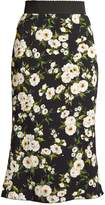 Dolce & Gabbana Floral-print high-rise cady skirt