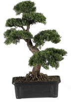 Asstd National Brand Nearly Natural 24 Cedar Bonsai Silk Plant