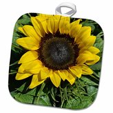 3dRose Patricia Sanders Flowers - sunflower - 8x8 Potholder (phl_22675_1)