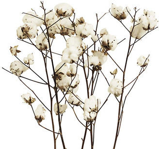 Knud Nielsen Company Set of 5 Cotton Stalks - Dried