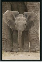 "Bed Bath & Beyond ""Big Ears"" Baby Elephant Framed Art Print"
