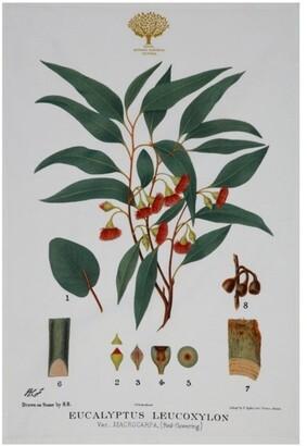 Maxwell & Williams Royal Botanic Garden Tea Towel 50x70cm