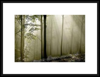 La Grolla Green Woods Ii Framed Photographic Print