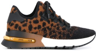 Ash Krush leopard sneakers