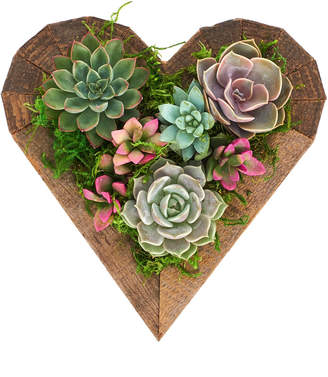 Home Botanicals Living Succulent Heart Wood Planter- Succulent Centerpiece-Arrives Planted