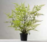 Pottery Barn Potted Tree Fern