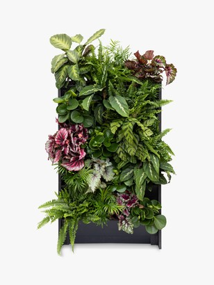 The Little Botanical 20 Indoor House Plants Living Wall