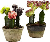 Asstd National Brand Colorful Cactus Gardens Set Of 2