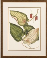 Wallace Botanical Print I
