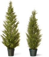 Bed Bath & Beyond National Tree Arborvitae with Green Pot